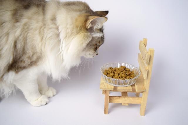 キャットフードを見ている猫の写真