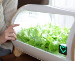 家庭菜園もスマホでする時代!?スマート菜園「foop Lite」