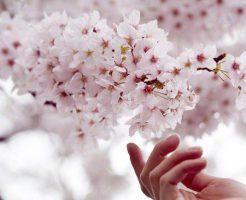 お花見シーズン到来!100倍楽しめる行楽グッズをご紹介!